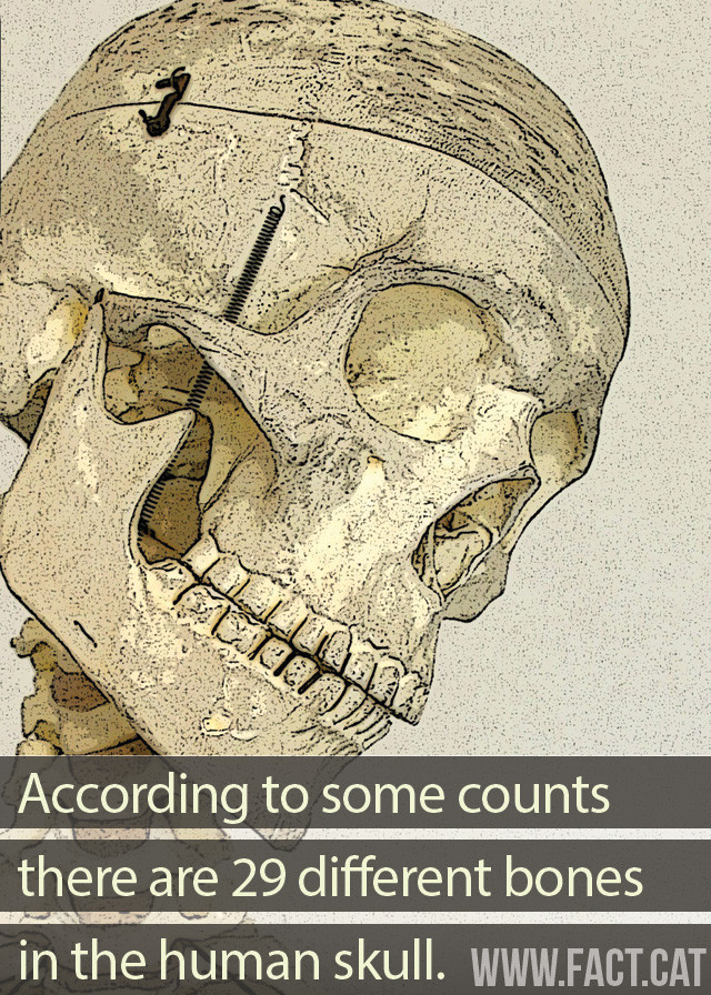 How Many Bones Are There In The Human Skull