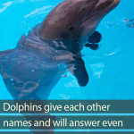Do dolphins use names when communicating?
