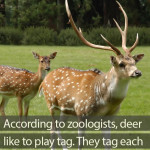 Do deer play the game of tag?